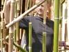 les bambous: préparation